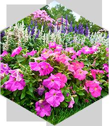 headerbox-flowers