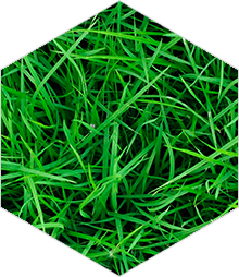 headerbox-lawn
